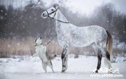 生肖马是怎么来的属马的人有哪些性格特点